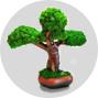 Интерьерные деревья